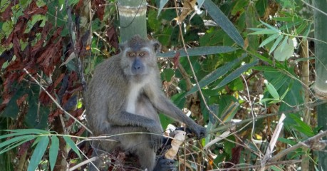 Monkey in Koh Lanta