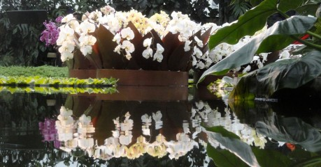 Reflecting Orchids