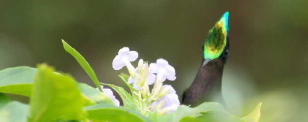 Hummingbirds at The Treehouse in St Lucia