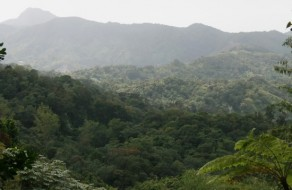 Mountain View across the rainforest