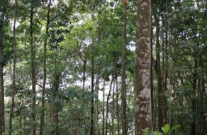 Trees in the Rainforest
