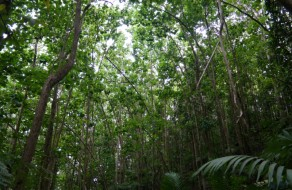 Healthy Rainforest Canopy