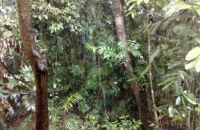 Daintree Rainforest in Queensland Australia