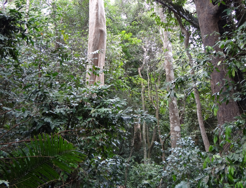 vegetation in the tropical rainforest Animals and plants of the rain forest because tropical rain forests are some of the oldest ecosystems on earth, they are home to a diverse population of plants and.