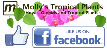 Find Molly On Facebook!